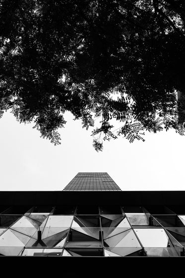 modern building with tree