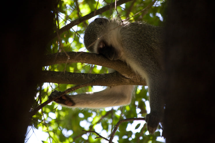 monkey-napping-in-tree.jpg?width=746&for