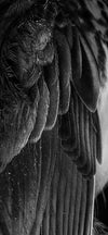 monochrome close up of feathers