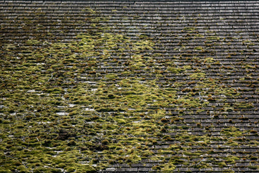 mossy rooftop