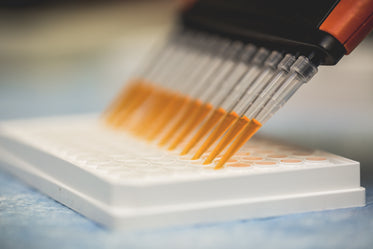 multi channel pipette and assay plate