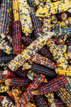 multicolored husked corn stacked
