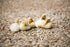 Newly Hatched Ducklings