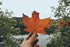 oranage fall leaf held  in front  of valley