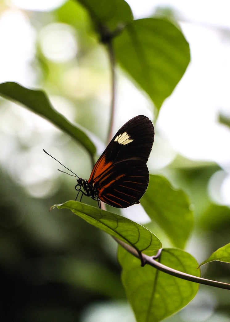 Orange And Black Butterfly On Branch