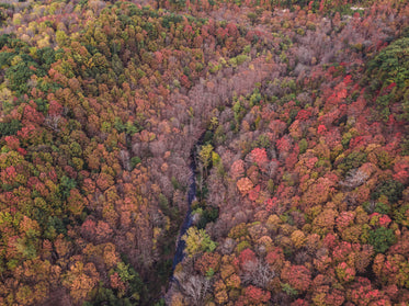 orange and red leaves of fall from above