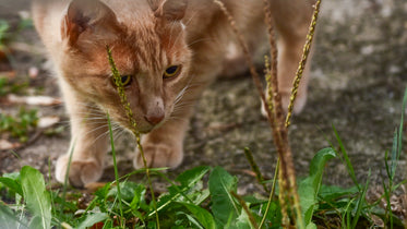 orange tabby cat prowling through grass and plants