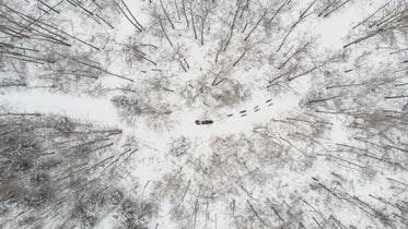 overhead view of a sled dog team cutting through winter forest