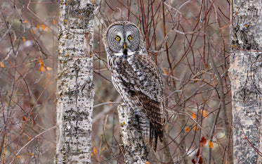 owl looks at camera with wide eyes in a tree