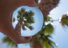palm tree reflected in glass ball