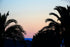 High Res Palm Tree Silhouettes At Dusk Picture — Free Images