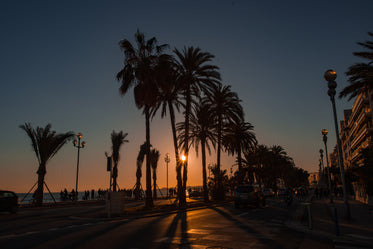 palm trees along boardwalk at sunset