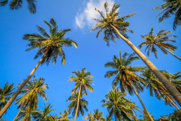 Picture of Palm Trees Sky - Free Stock Photo