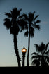 palm trees street light