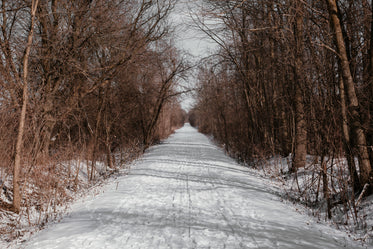 pathway lined with snow and bare trees