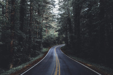 paved road through forest