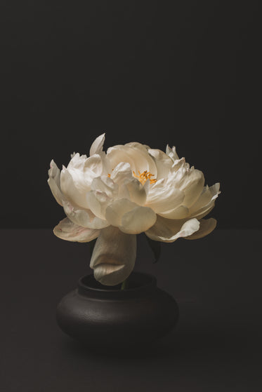peony blossom in the vase