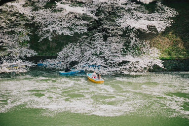people in small boats enjoy trees in bloom with white flowers