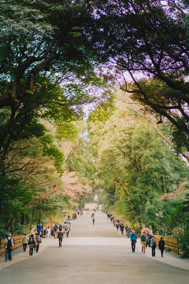 people walk down wide pathway surrounded by trees
