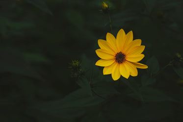 perfect yellow flower