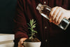 person gets ready to water a small potted plant