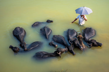 person holding an umbrella surrounded by animals
