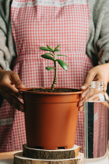 person holds the sides of a potted plant