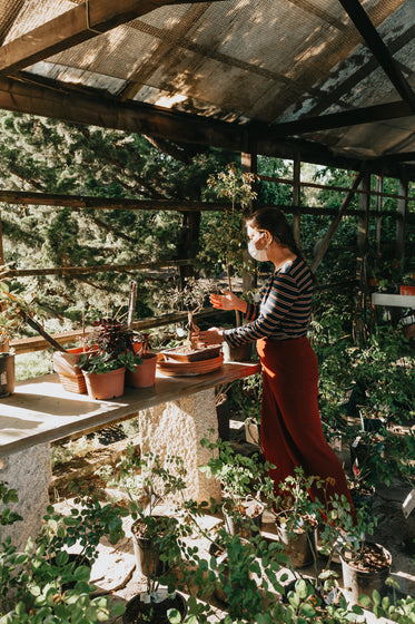 person in a facemask tends to a table of plants