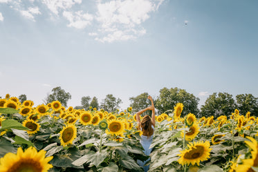 person standing in sunflower field