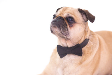 Picture of Pet Accessory - Free Stock Photo