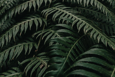 photo of large deep green plant leaves