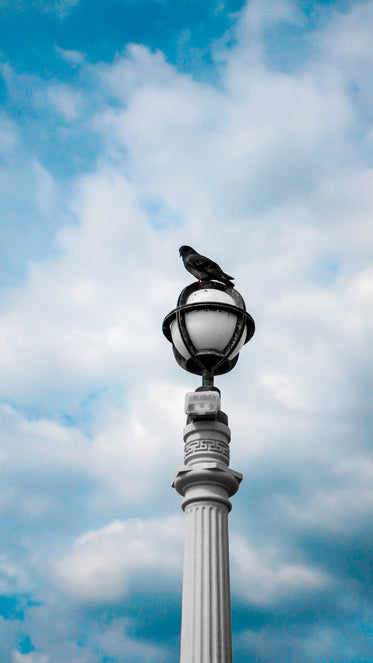pigeon rests on lamppost