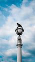 Free Pigeon Rests On Lamppost Photo — High Res Pictures