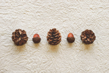 pine cones and acorns lined up on paper
