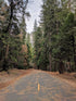 High Res Pine Forest And Road Picture — Free Images