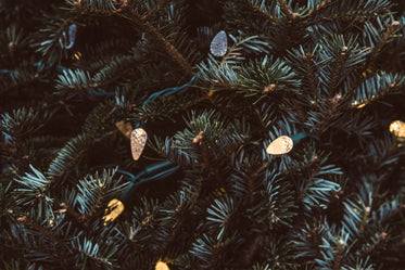 Free Pine Greenery With Holiday Lights Image: Browse 1000s of Pics