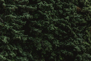 Picture of Pine Tree Texture Dark Greens — Free Stock Photo