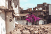 pink blossoms over crumbling walls