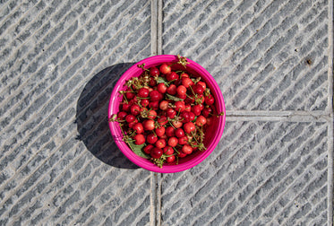 pink bowl of cherries on the ground