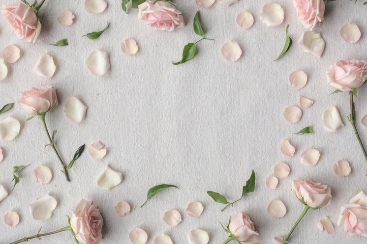Pink Roses Create A Border On A White Cloth