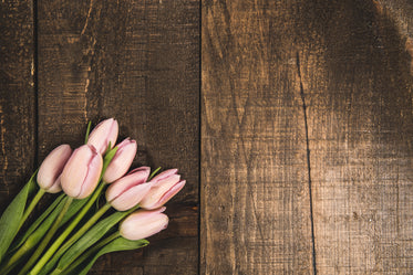 pink tulips on wood texture