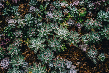 plant wall of succulents