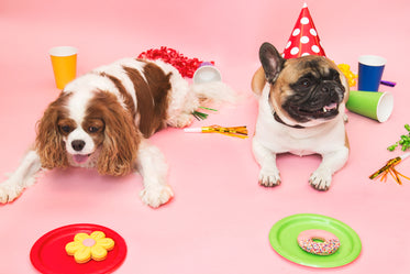 poochie party treats