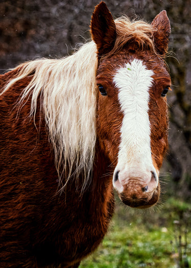 portrait of a brown and white horse
