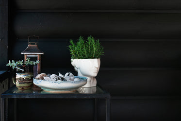 potted plants and shells on black