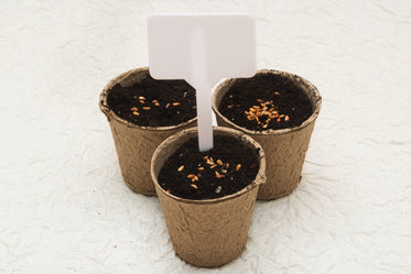 potted seeds