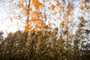 prairie plantlife stands tall in autumn forest