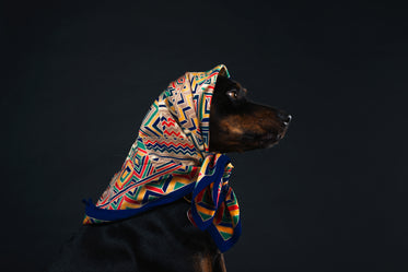 profile of a black and tan dog in a patterned scarf