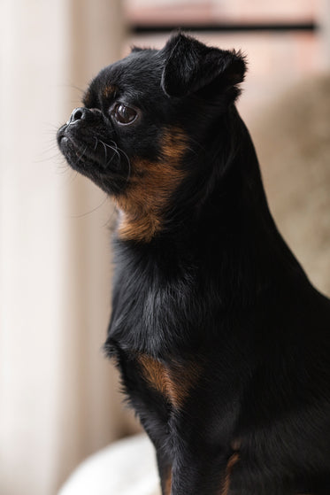 profile of a puppy standing tall