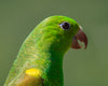 profile of a vibrant green bird with small brown beak
